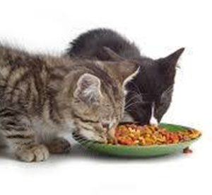 Gallery 2_0001_PFP-Gallery -Two cats eating